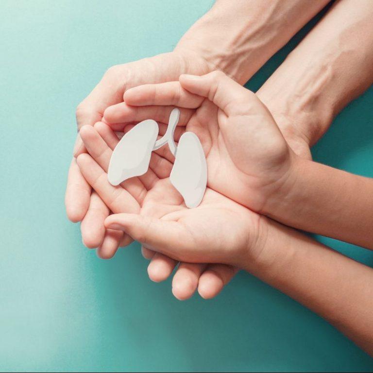 Lungenmodell in den Händen von Kind und Erwachsenem